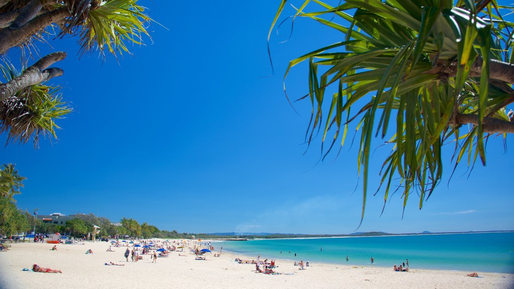 Noosa Beach showing a sandy beach and general coastal views