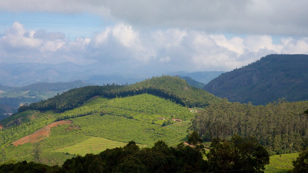 Doddabetta Peak which includes tranquil scenes and farmland