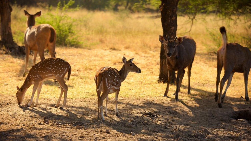 Parque Nacional Ranthambore ofreciendo animales