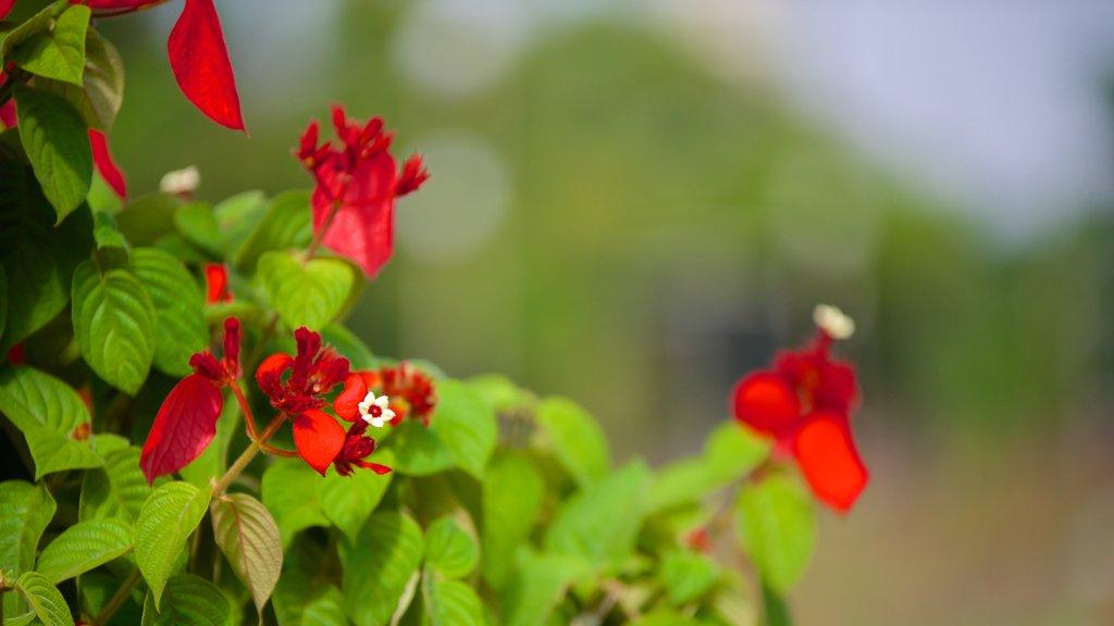 Hanging Gardens showing flowers