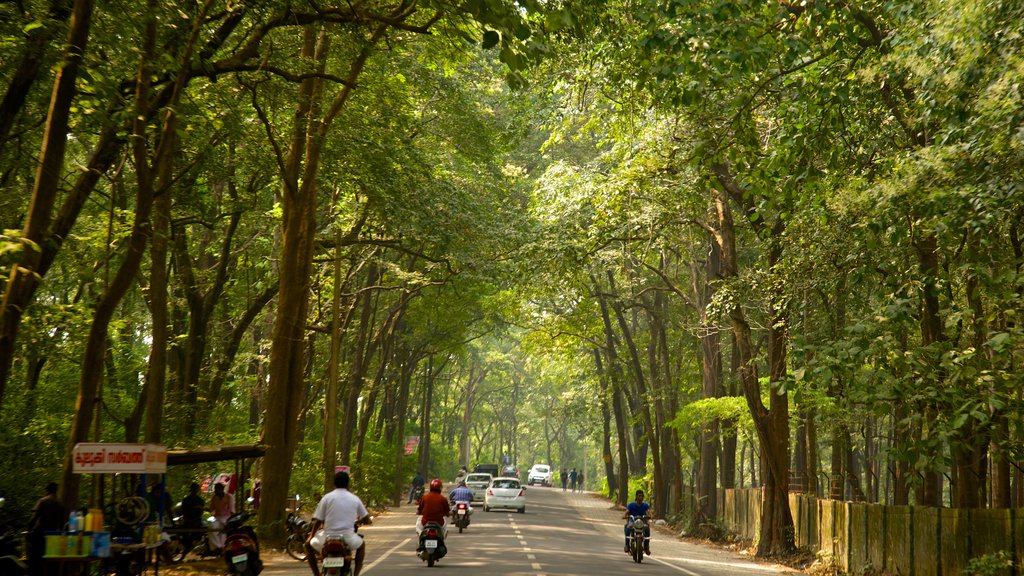 Ooty showing motorbike riding and forests