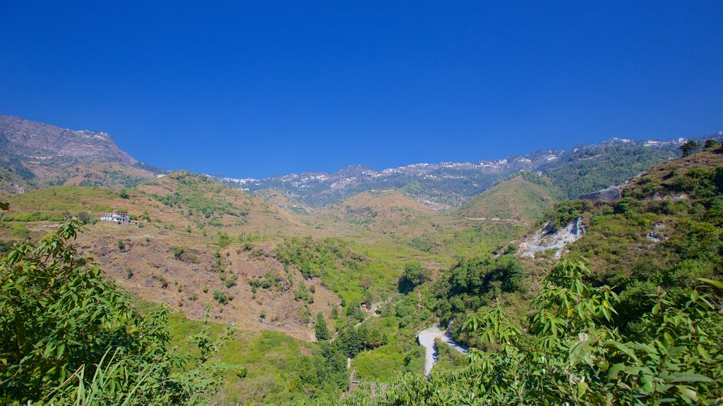 Mussoorie which includes tranquil scenes and rainforest