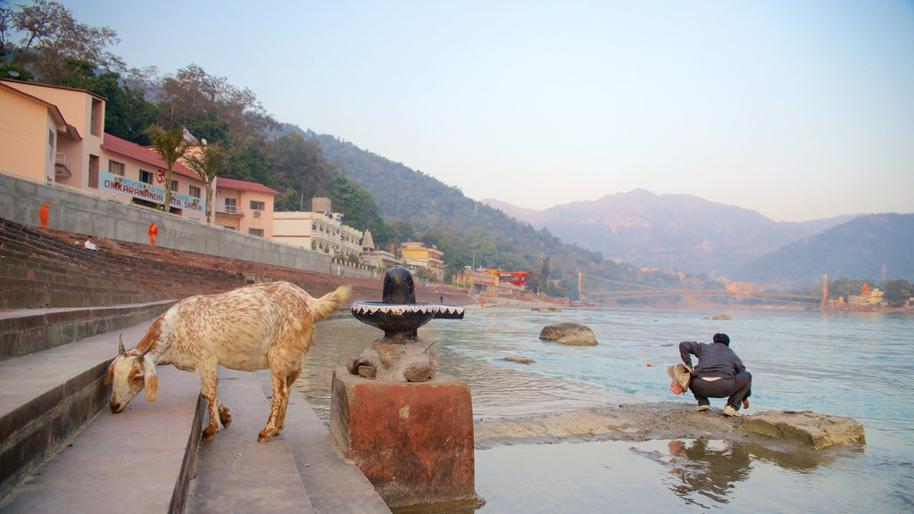 Ram Jhula featuring animals, a river or creek and a small town or village