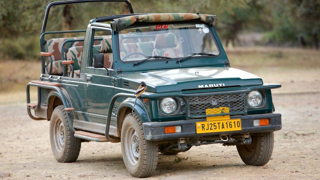 Parque Nacional Ranthambore ofreciendo turismo en vehículo