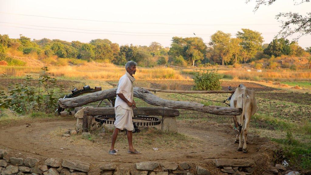 Udaipur ofreciendo tierras de cultivo y animales terrestres y también un hombre