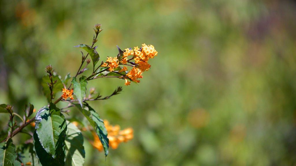Mussoorie featuring wildflowers