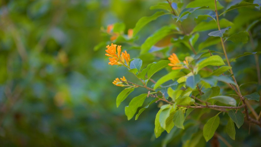 Mussoorie showing wildflowers