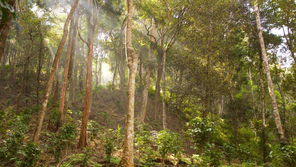 Madikeri featuring rainforest