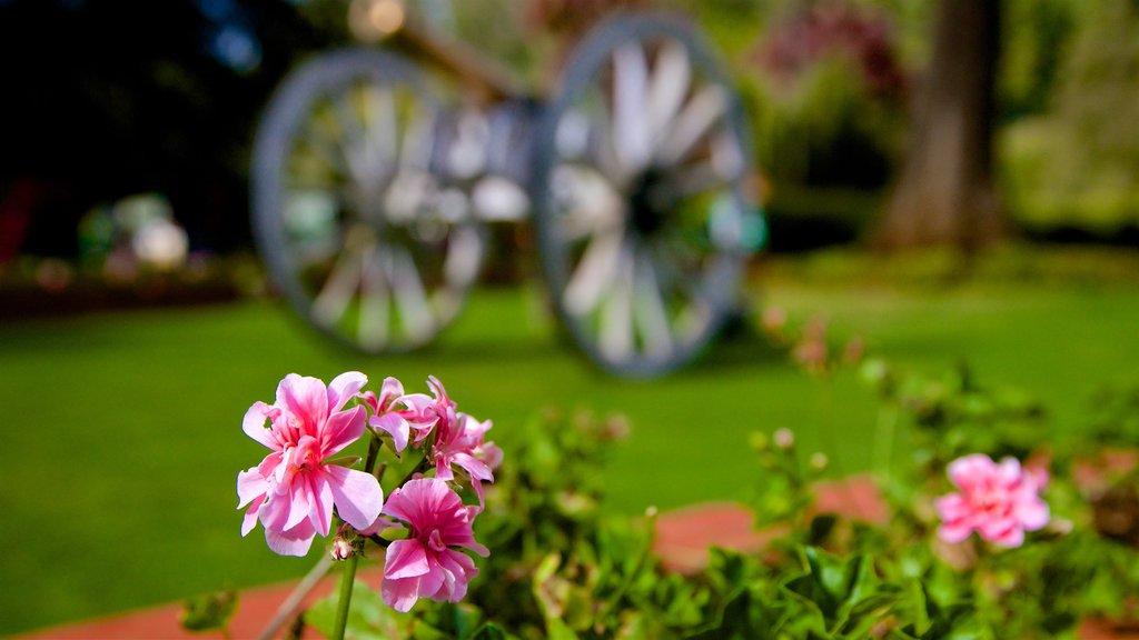 Botanical Gardens featuring a garden and flowers