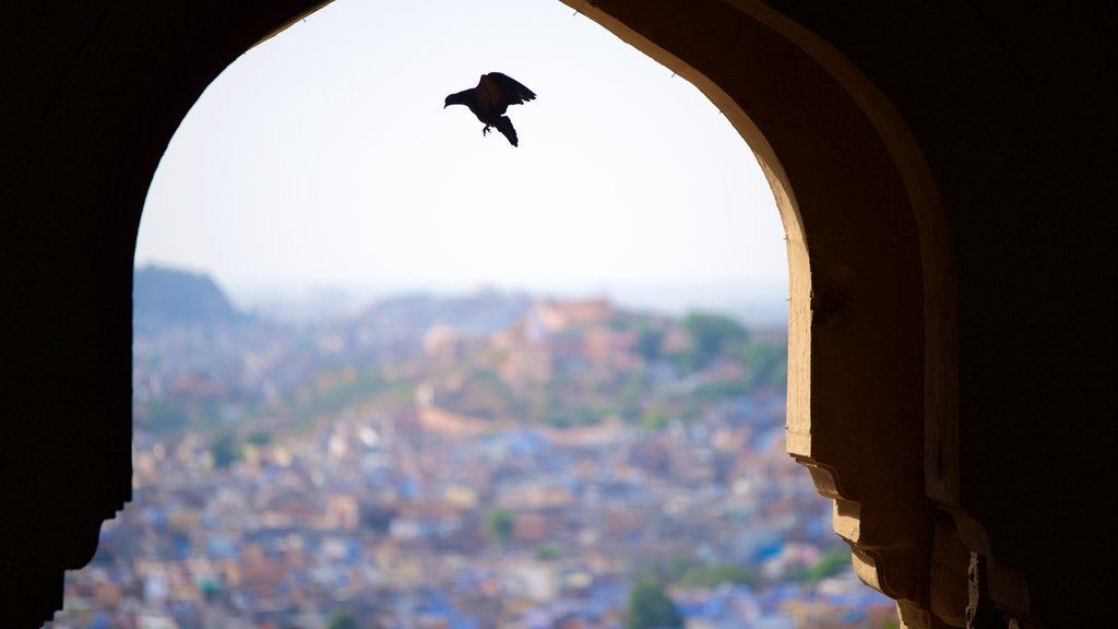 Mehrangarh Fort which includes bird life and heritage elements