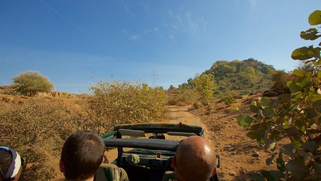 Parque Nacional de Ranthambore mostrando vistas al desierto y manejo de vehículo de doble tracción