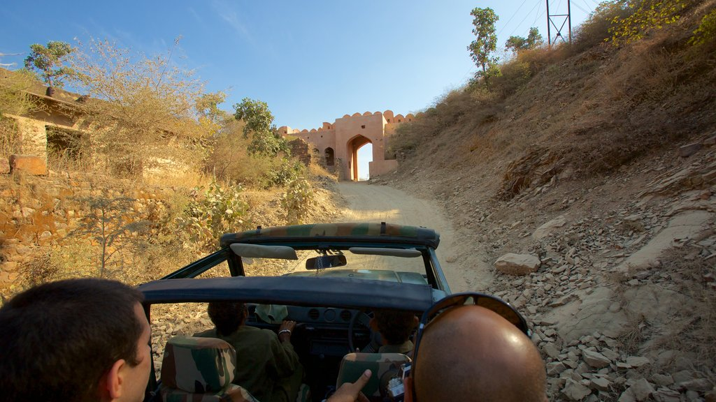 Ranthambore National Park which includes safari adventures and tranquil scenes