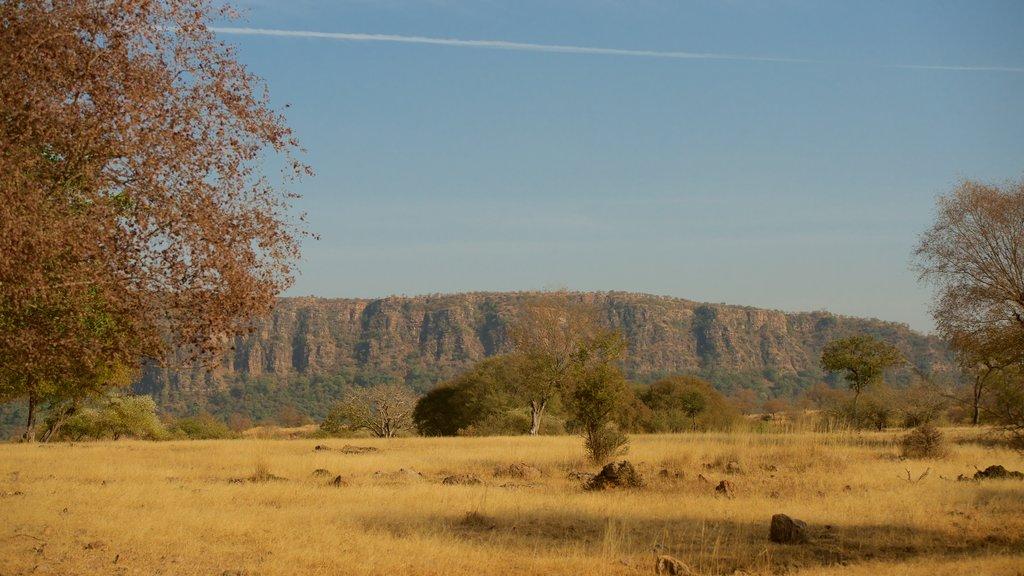 Parque Nacional de Ranthambore mostrando vistas al desierto