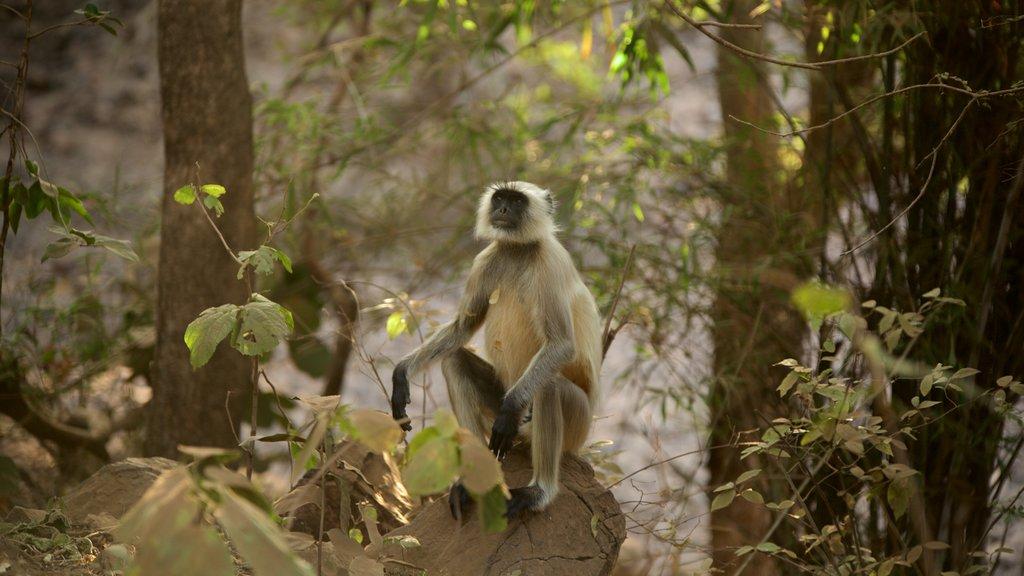Parque Nacional Ranthambore mostrando animales