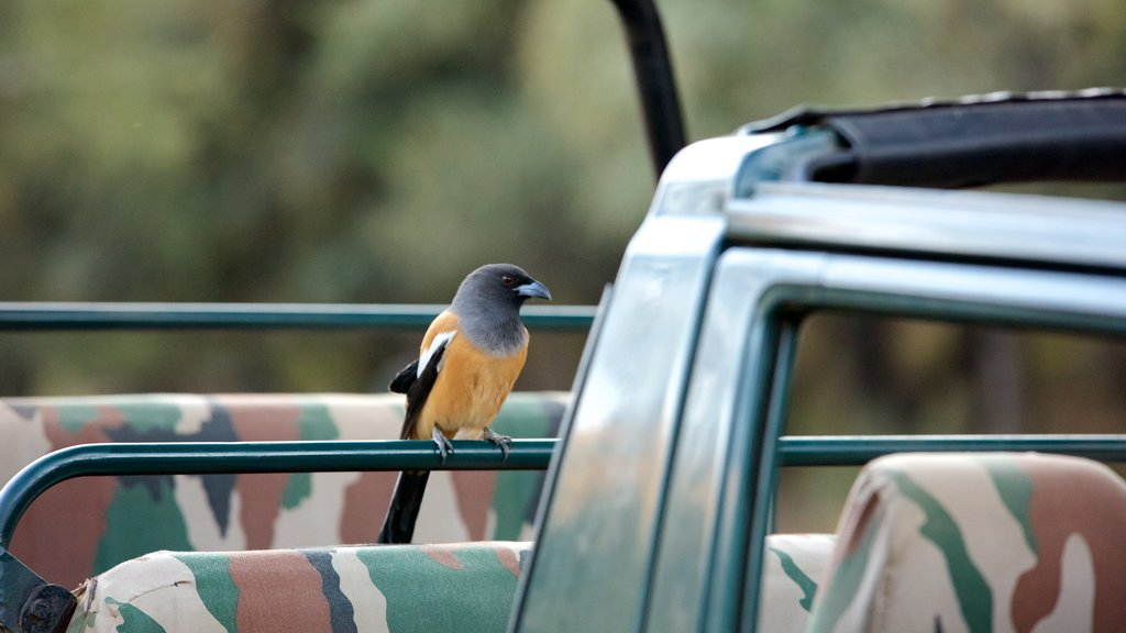 Parque Nacional Ranthambore mostrando vida de las aves