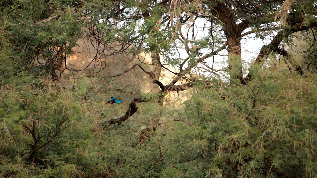 Parque Nacional Ranthambore mostrando escenas tranquilas