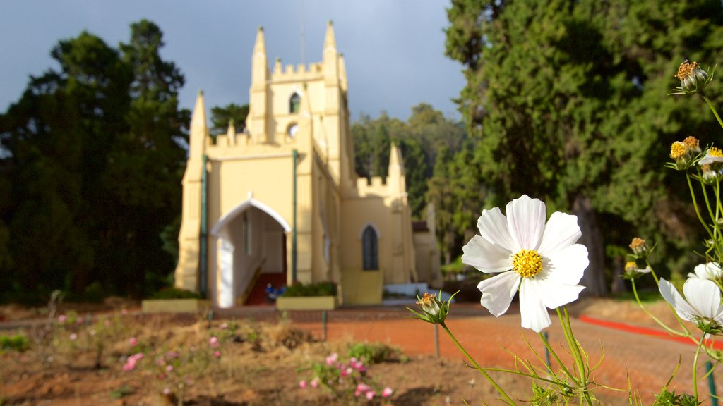 St. Stephen\'s Church showing flowers and a church or cathedral