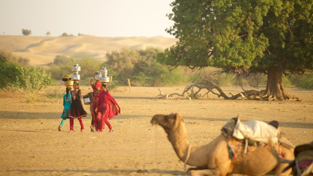 Khuri Sand Dunes which includes desert views and land animals as well as a small group of people