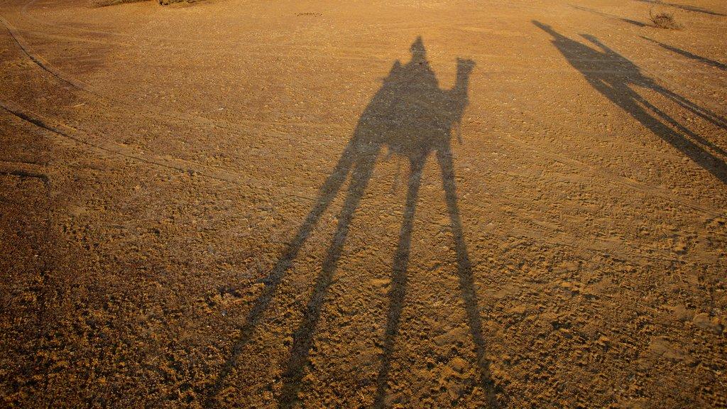Khuri Sand Dunes featuring desert views