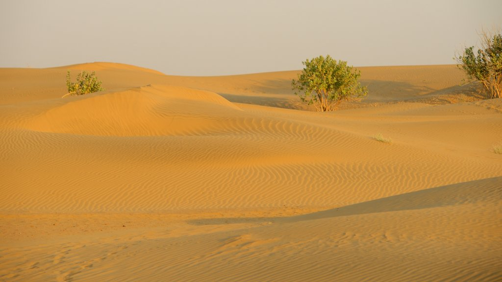 Khuri Sand Dunes showing tranquil scenes and desert views