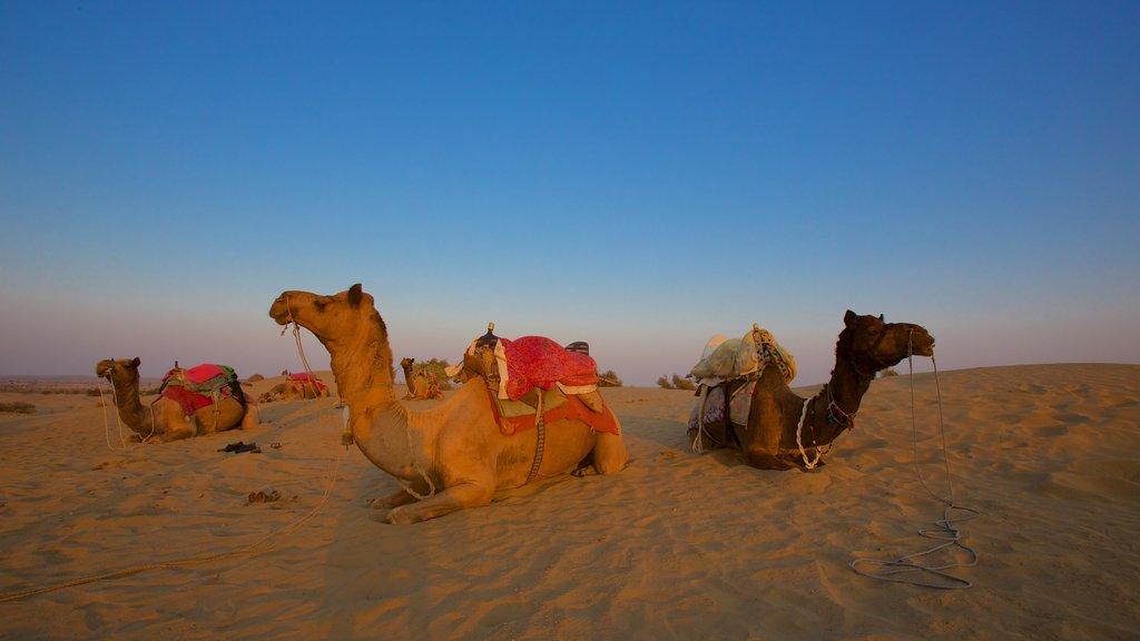 Khuri Sand Dunes featuring land animals and desert views