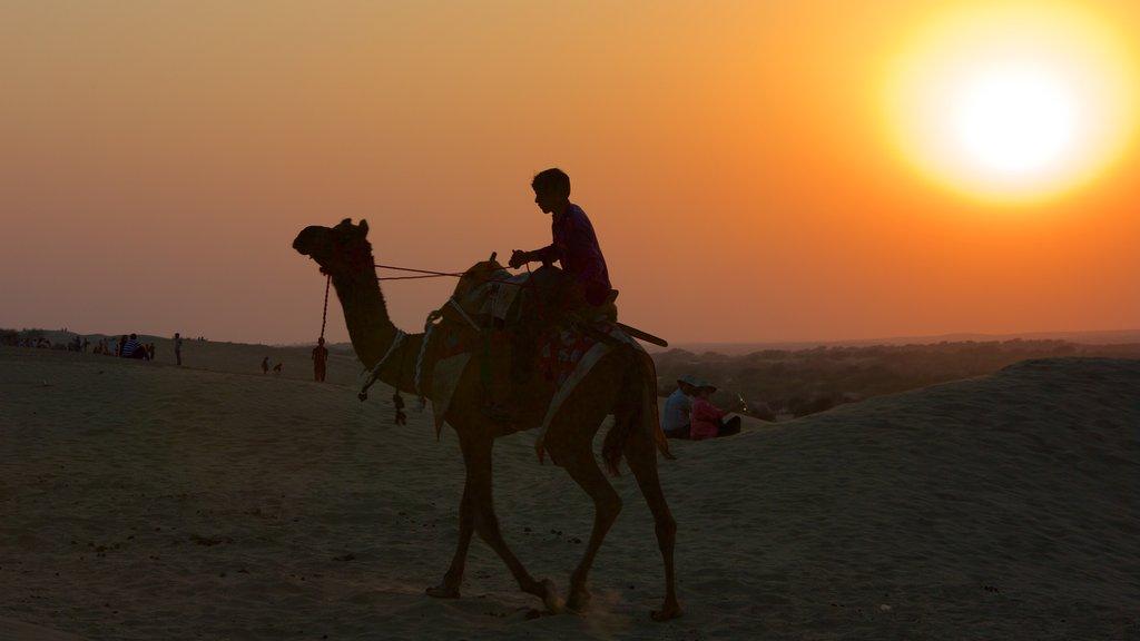 Khuri Sand Dunes showing desert views, a sunset and land animals