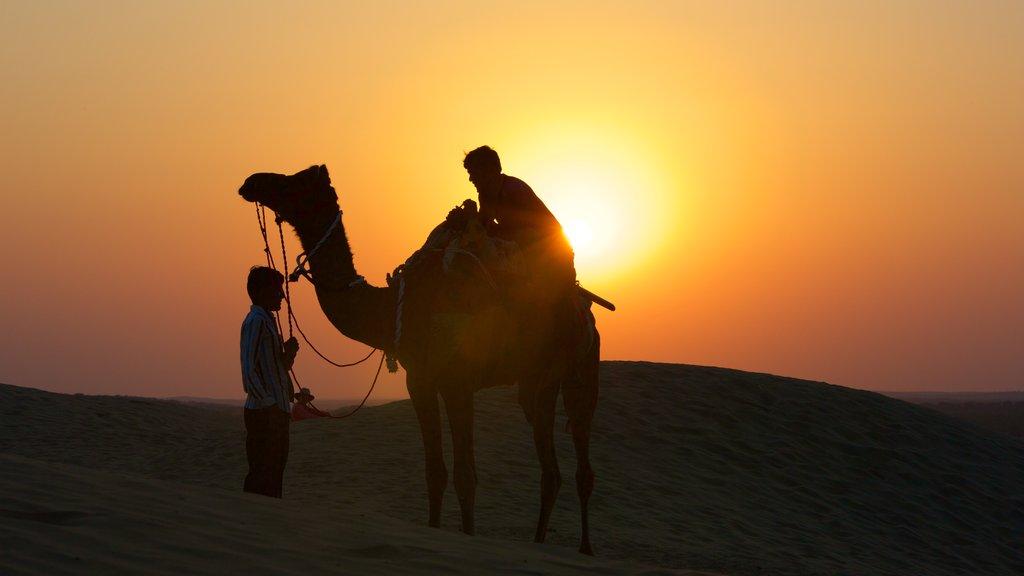 Khuri Sand Dunes showing desert views, land animals and a sunset