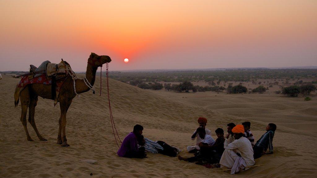 Khuri Sand Dunes showing land animals, desert views and tranquil scenes