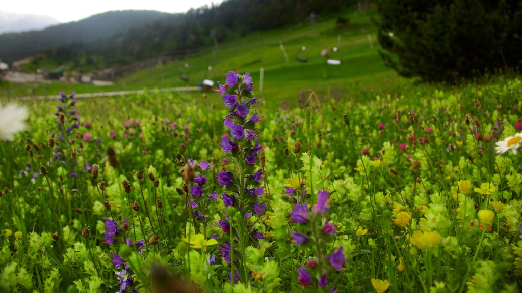 Arinsal which includes wildflowers and tranquil scenes