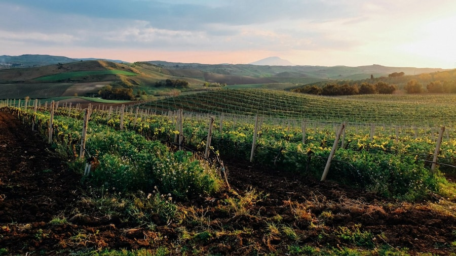 A Wine Lover's Guide to Sicily