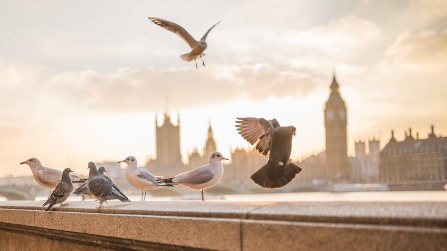 Barrios de Londres: 7 lugares que no te puedes perder de South Bank
