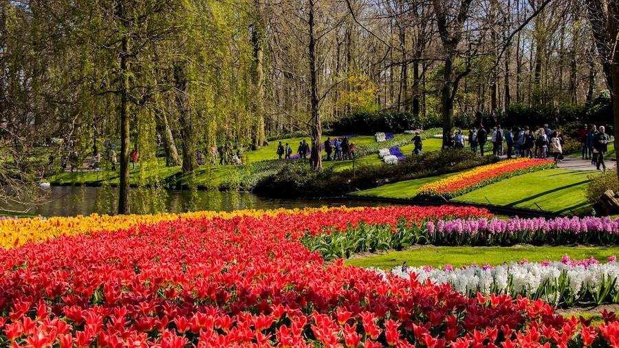 Parco dei tulipani Keukenhof: come arrivare da Amsterdam e cosa vedere