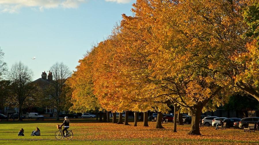 Londra in bici: i migliori itinerari e come noleggiare una bicicletta