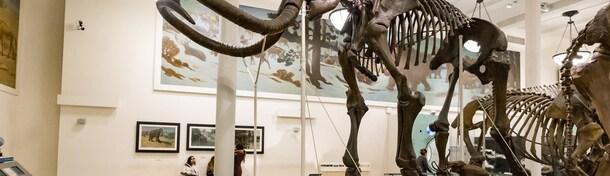 Guide pratique : visiter le Muséum d'Histoire naturelle de New York