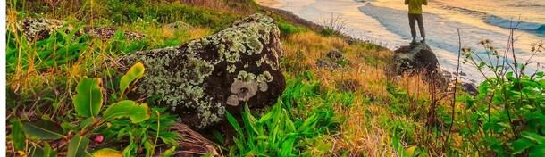 Blütenpracht: Hotels mit tropischem Garten auf Hawaii