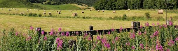 5 randonnées à faire en Auvergne
