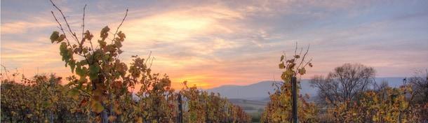 5 vins alsaciens incontournables