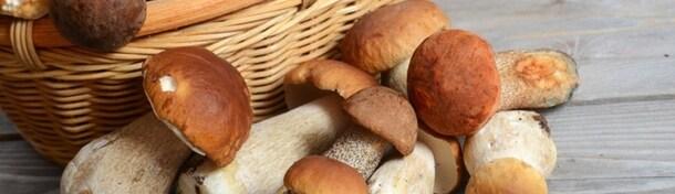 La Dordogne gourmande