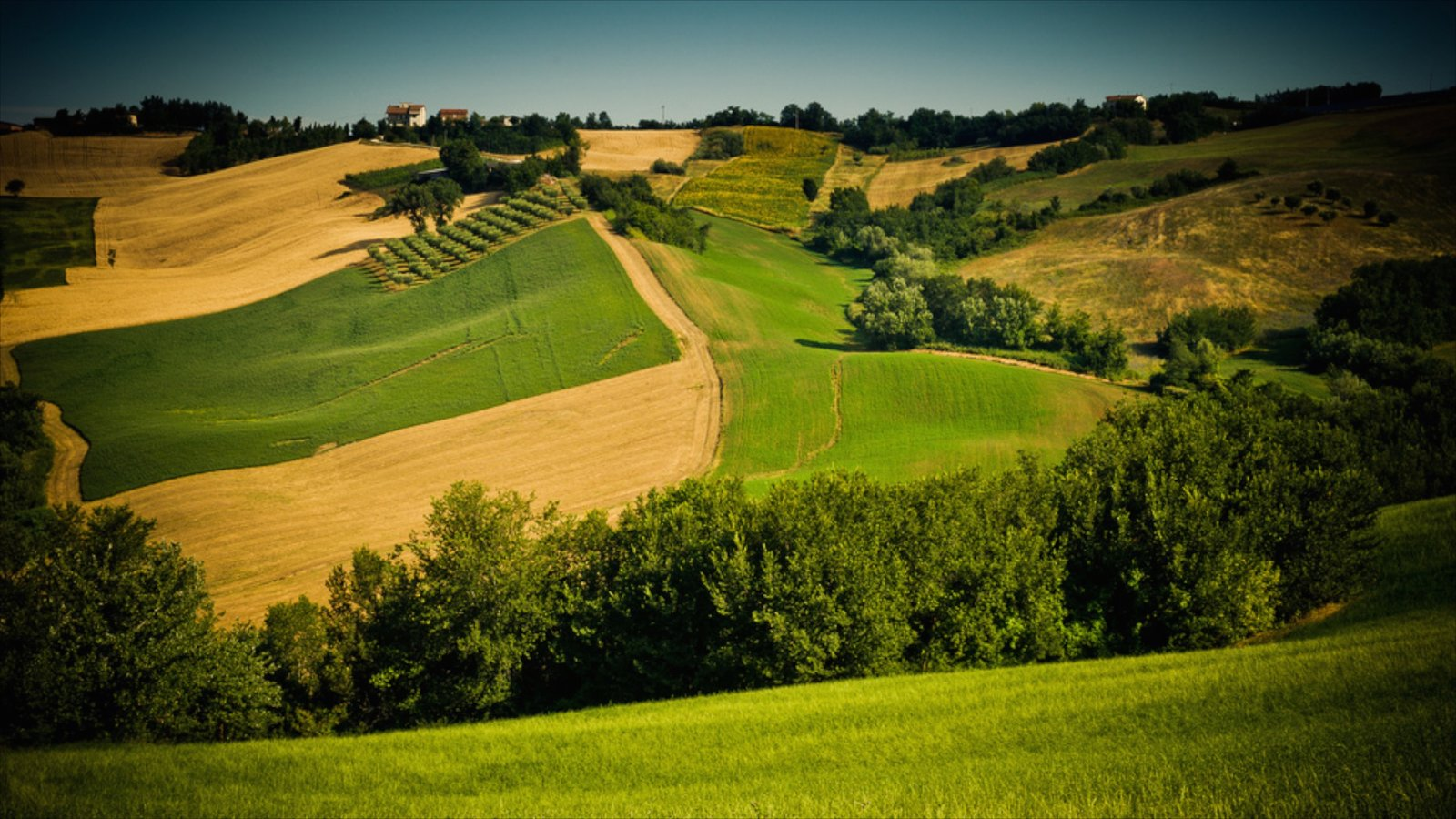 Sirolo featuring farmland and tranquil scenes