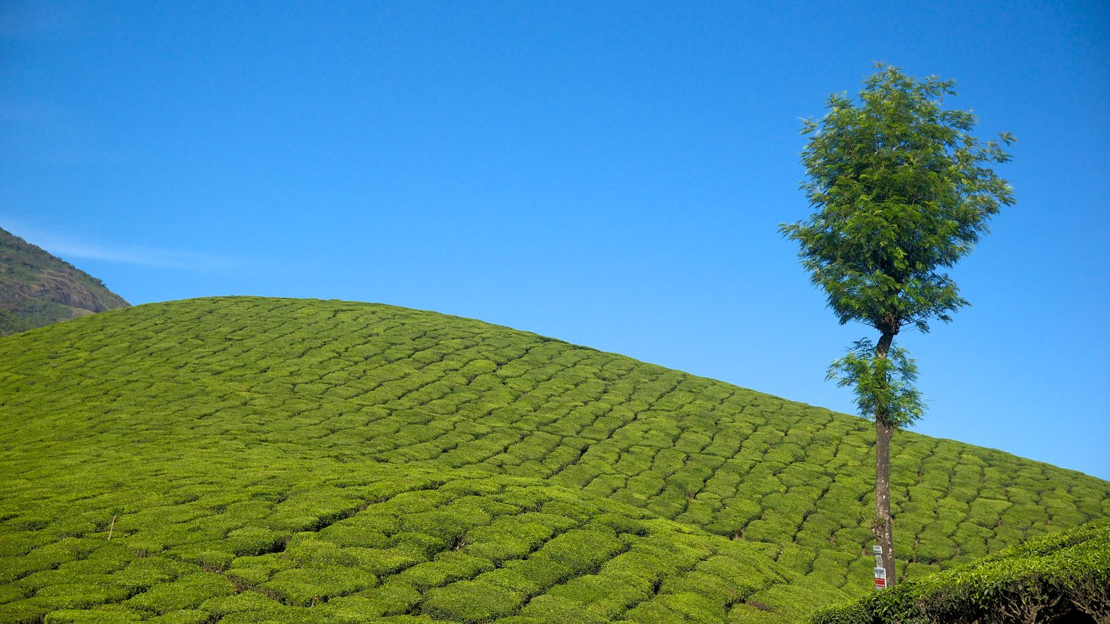 Munnar which includes tranquil scenes