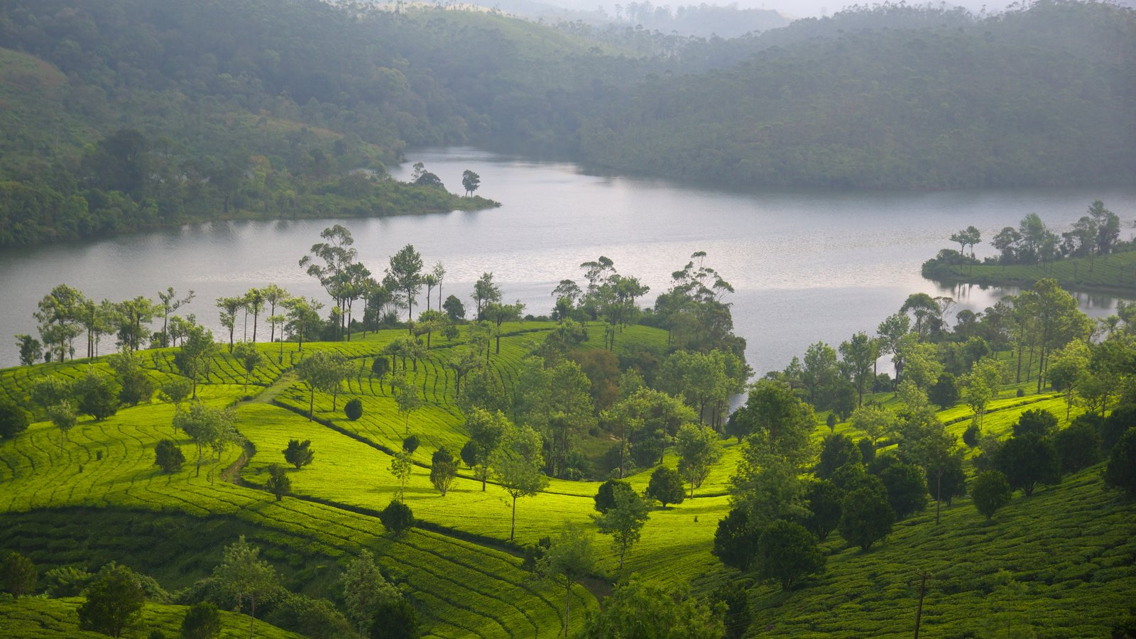 Munnar showing a lake or waterhole and tranquil scenes