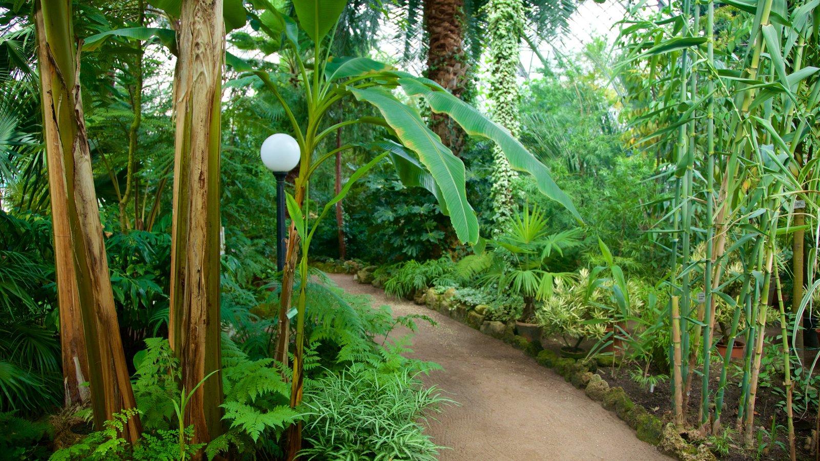 St Petersburg Botanical Garden Pictures View Photos Images Of St Petersburg Botanical Garden
