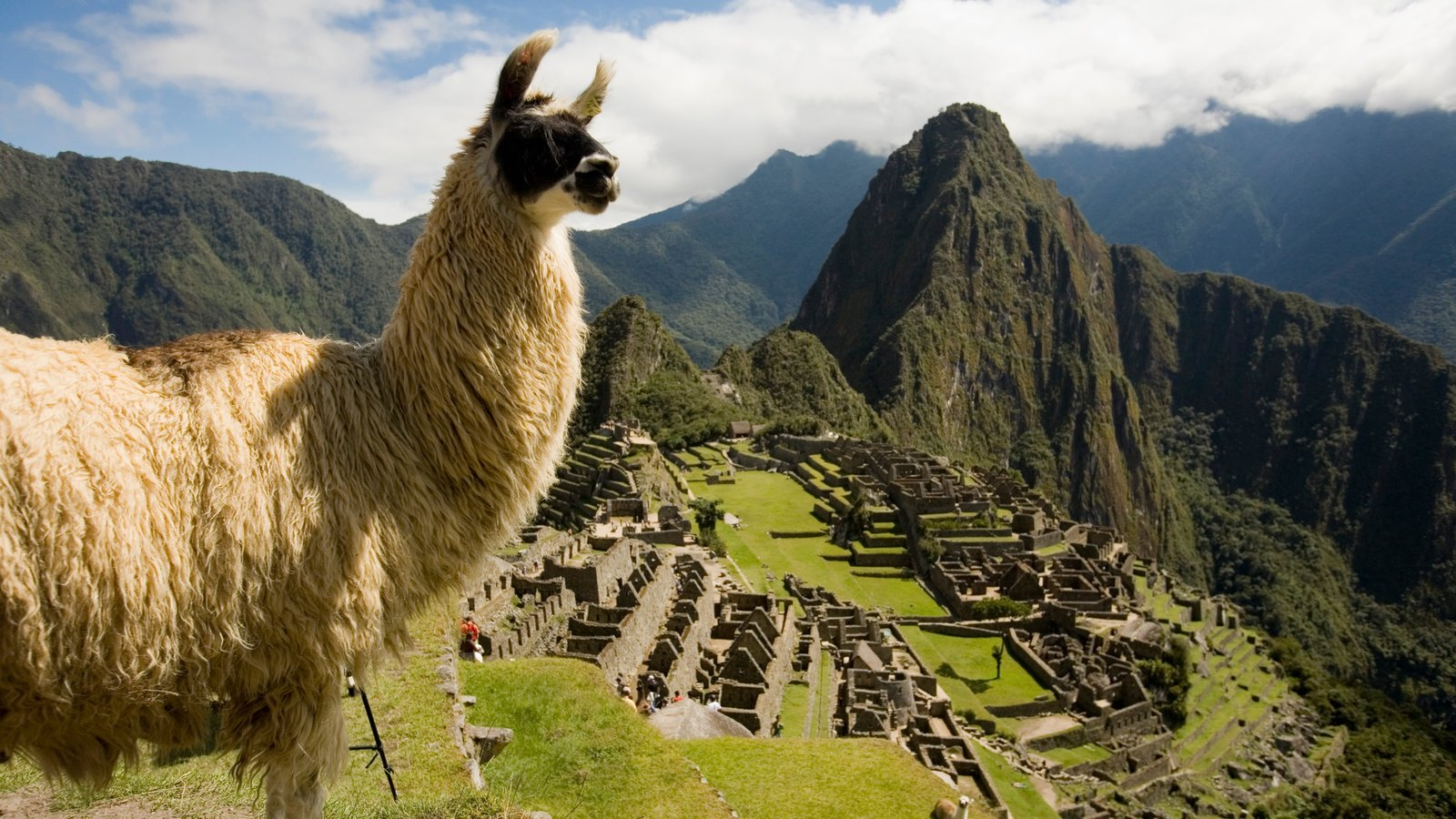 Huayna Picchu which includes animals, mountains and tranquil scenes