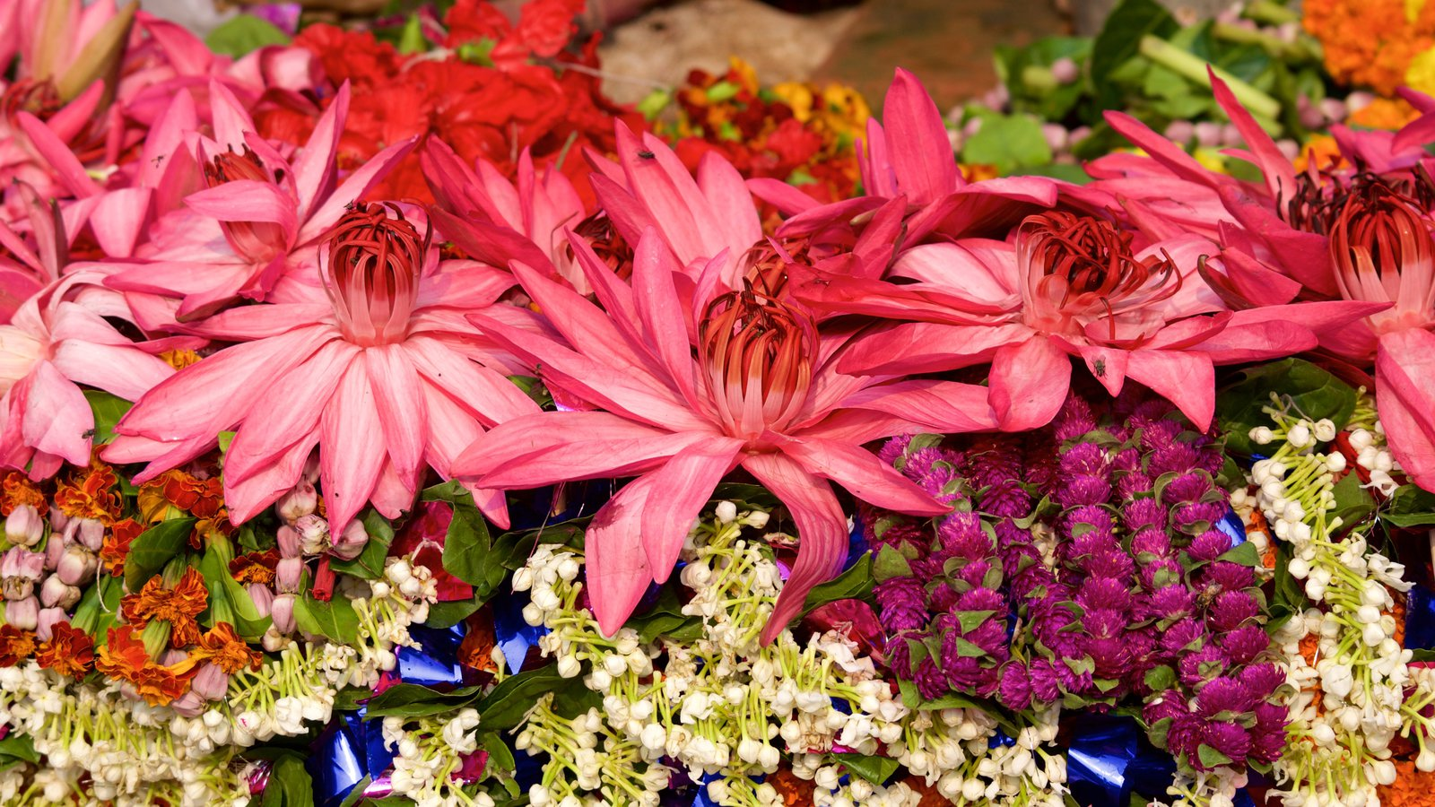 Flowers Pictures View Images Of India