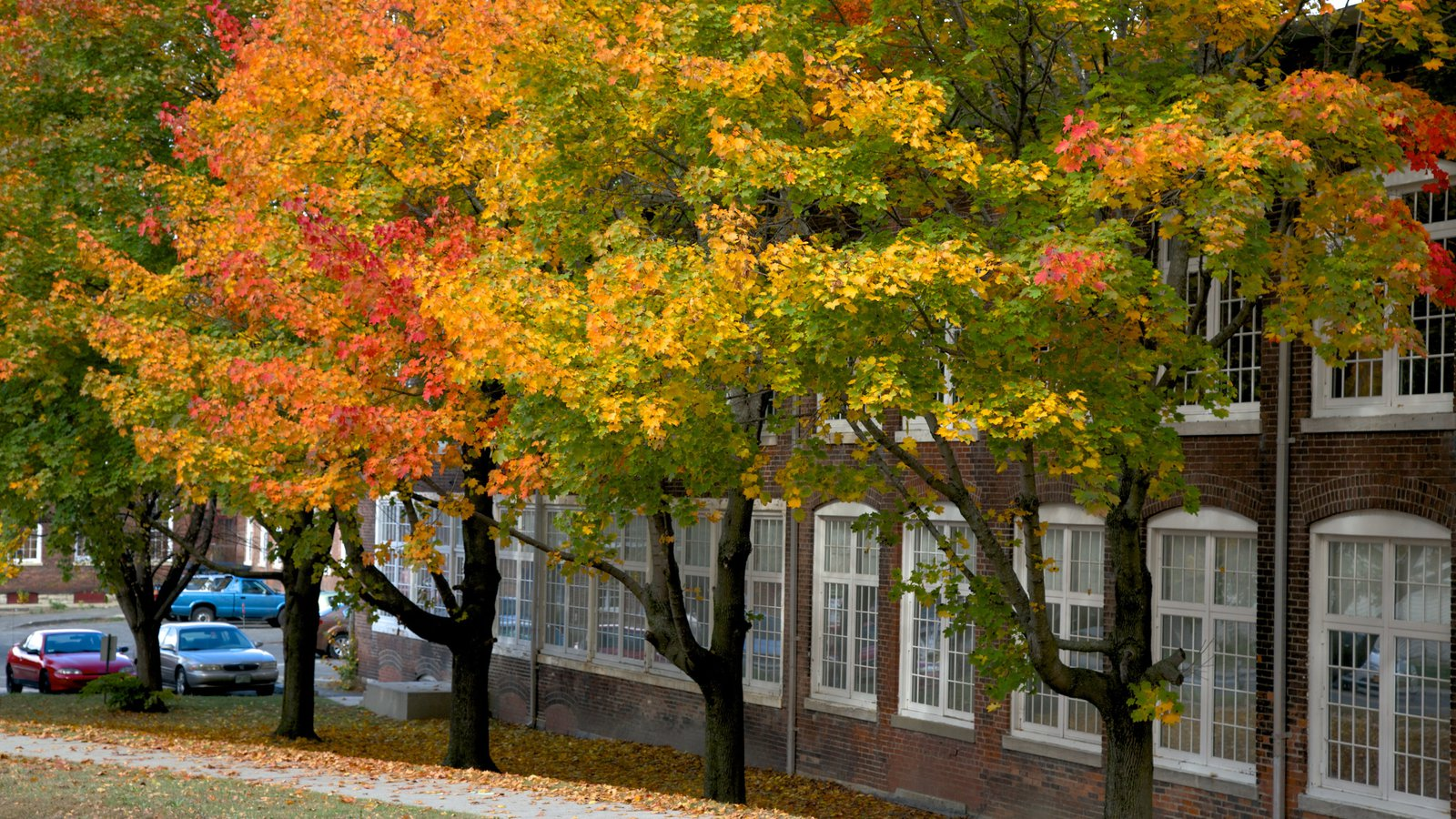North Adams showing autumn leaves