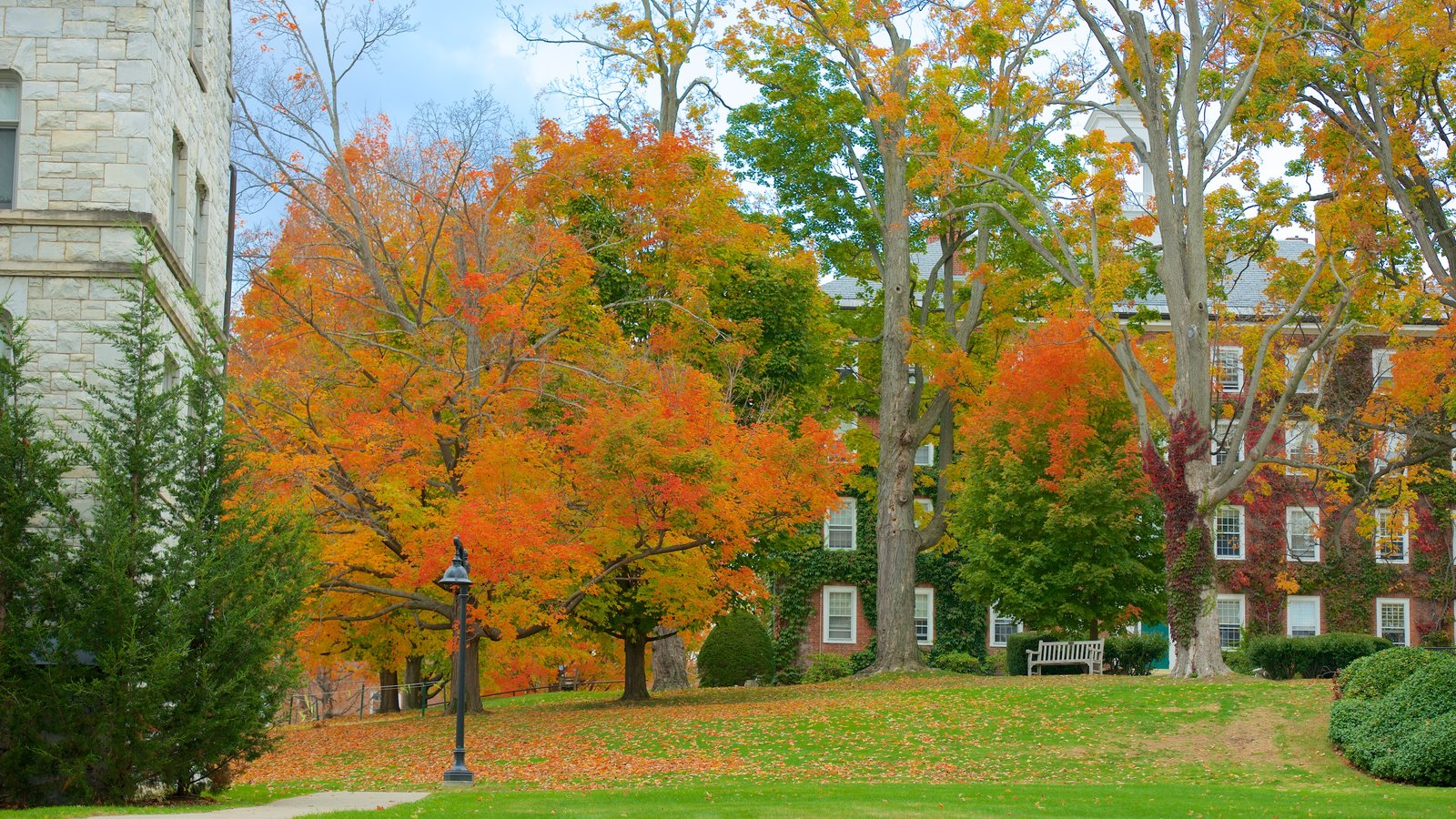 Williamstown featuring a park and autumn leaves