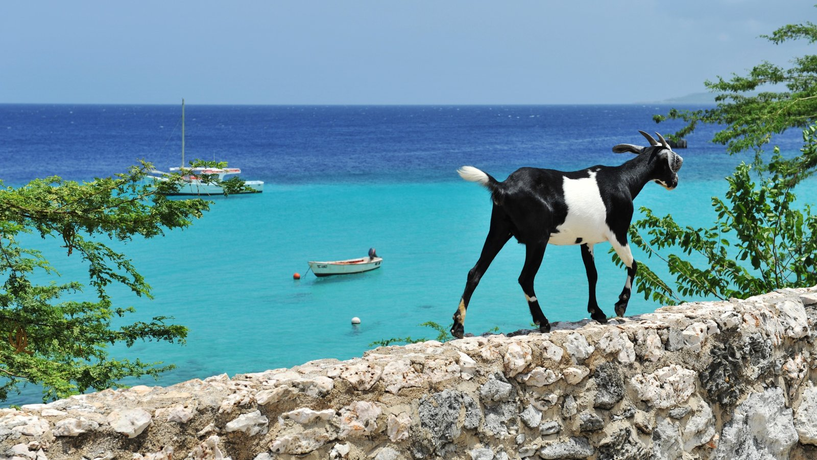 Curacao showing general coastal views and animals