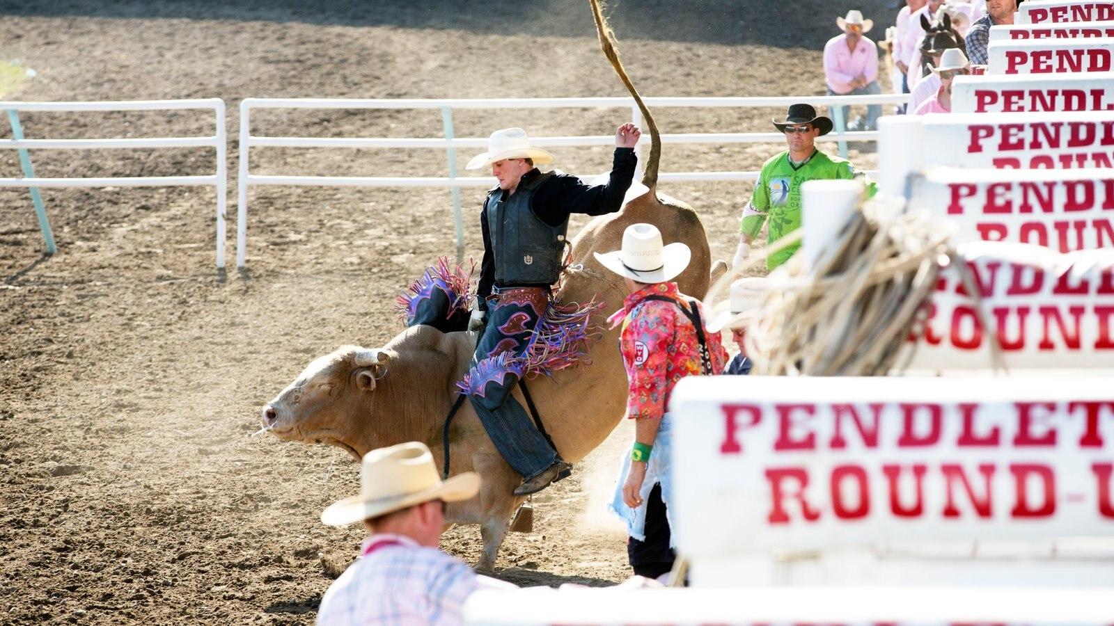 Pendleton ofreciendo animales terrestres y un evento deportivo y también un pequeño grupo de personas