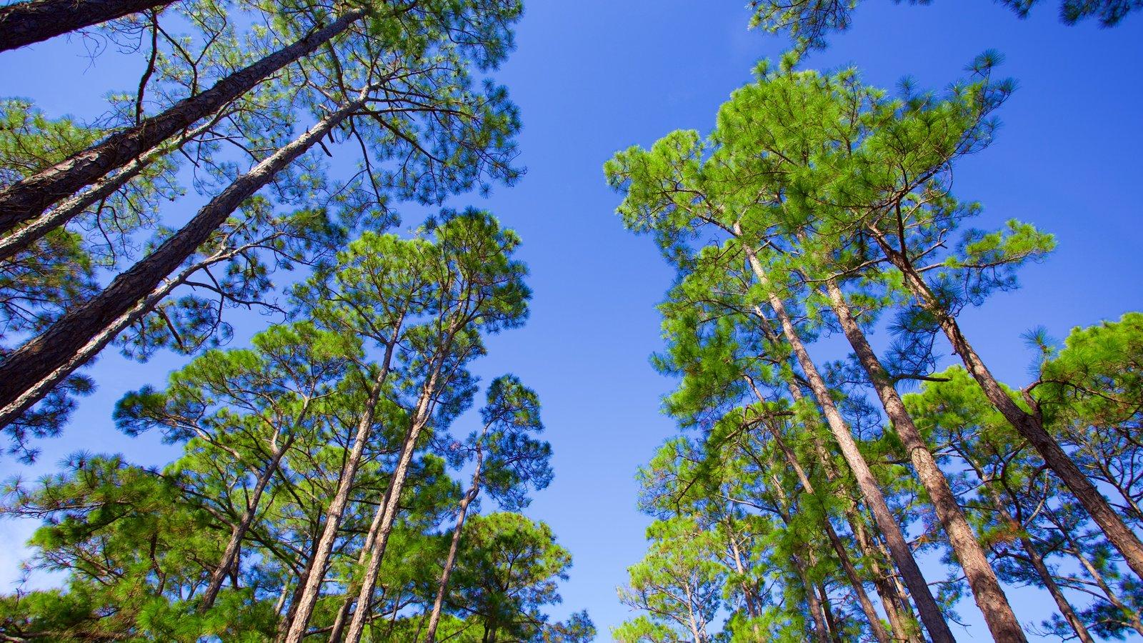 St. Andrews State Park caracterizando cenas de floresta
