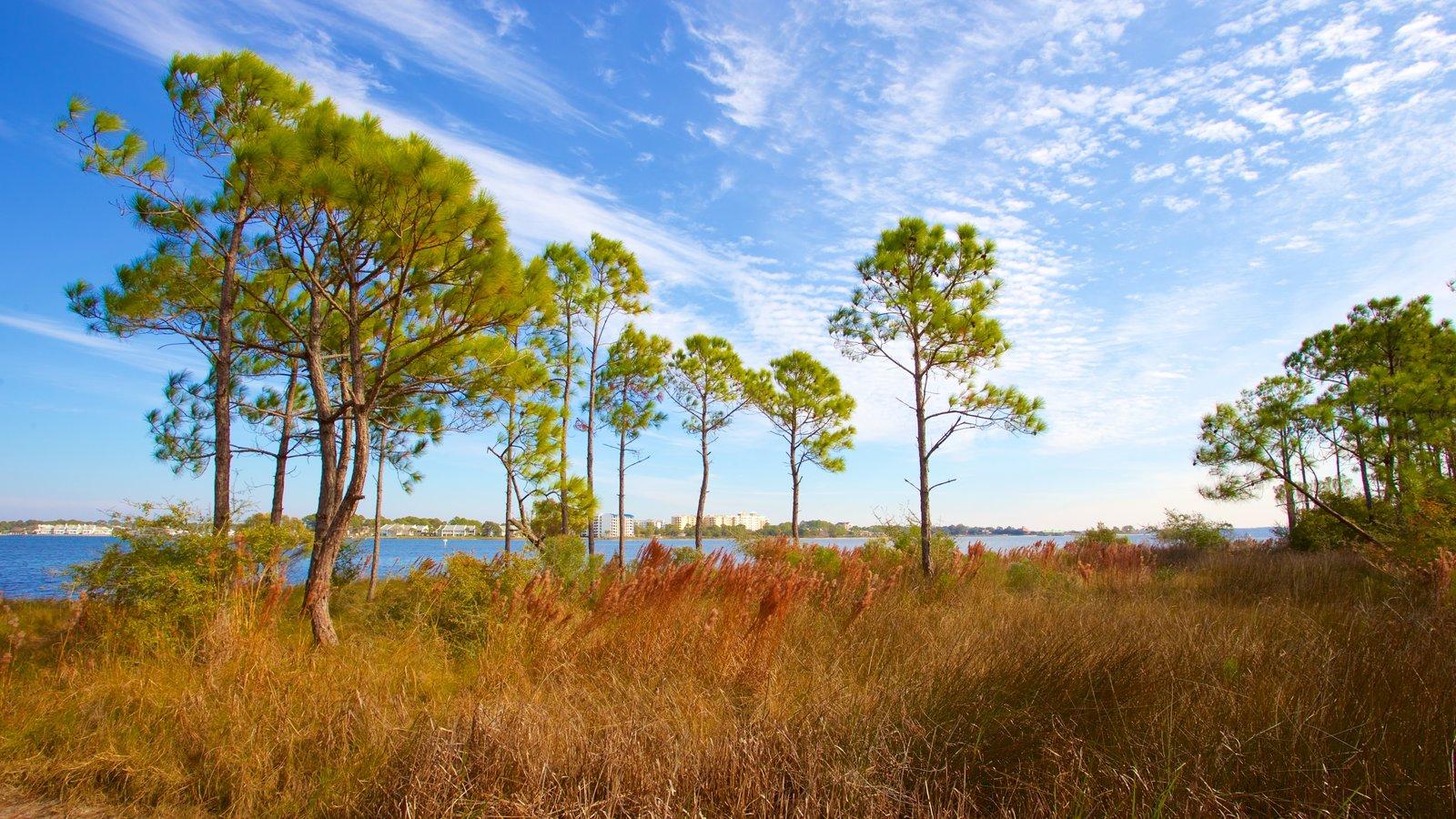 St. Andrews State Park caracterizando um lago ou charco e cenas tranquilas